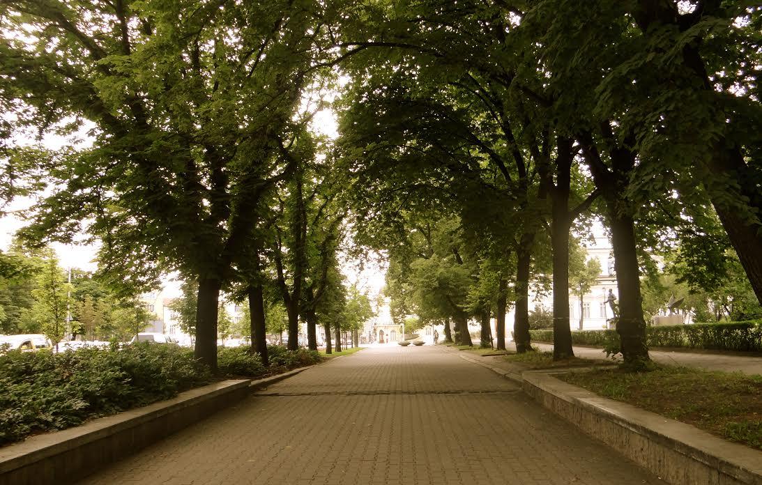 trees-walkway