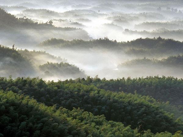 shunan-bamboo-forest-02