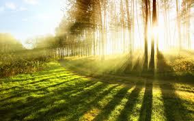 sunshine trees