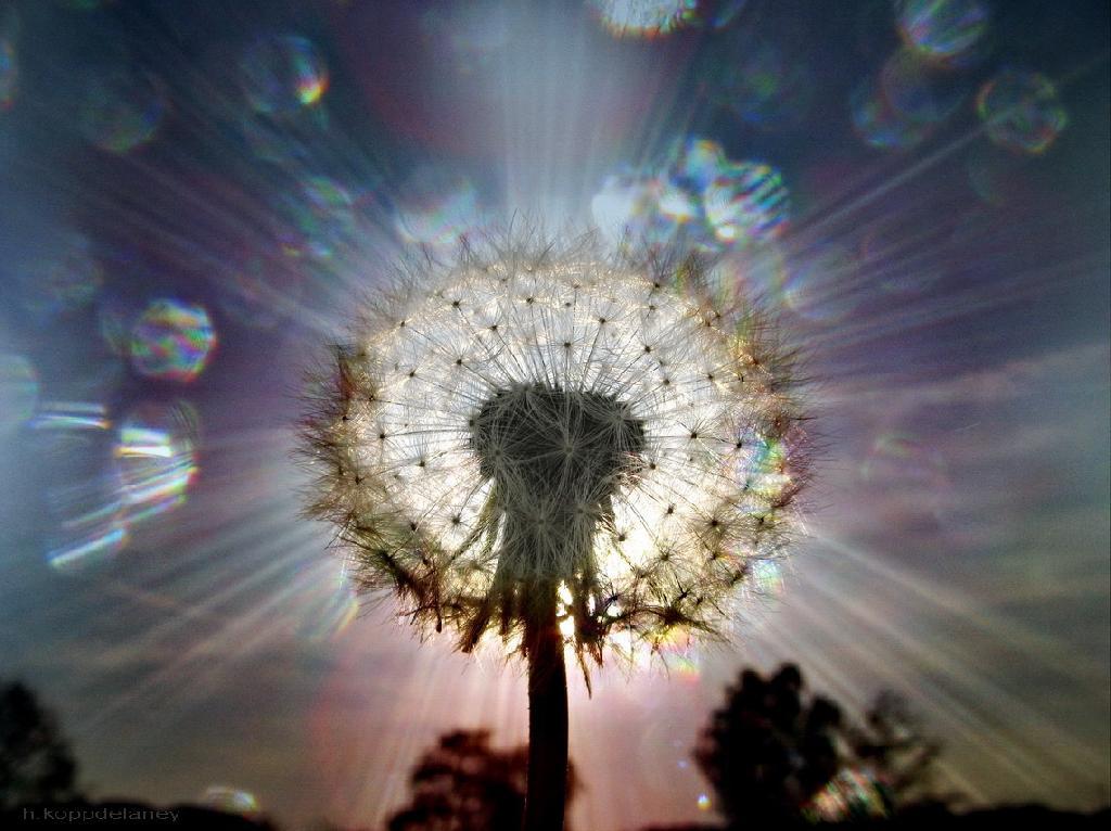 glowing-wish