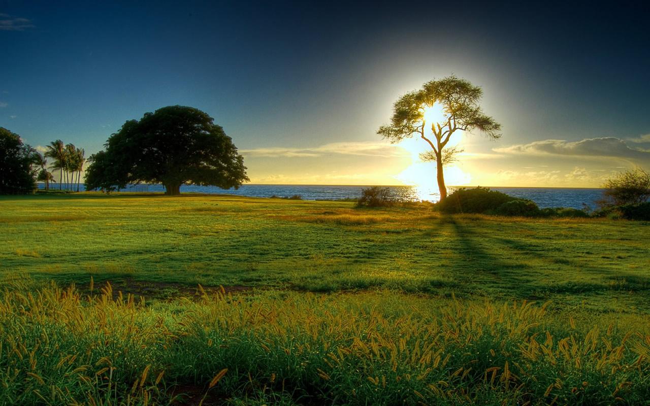Lighted Tree Field